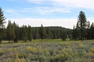 11623 Henness Road – SOLD!